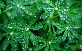 Бесплатные фото растение,зелень,роса,капли,дождь,вода,листья