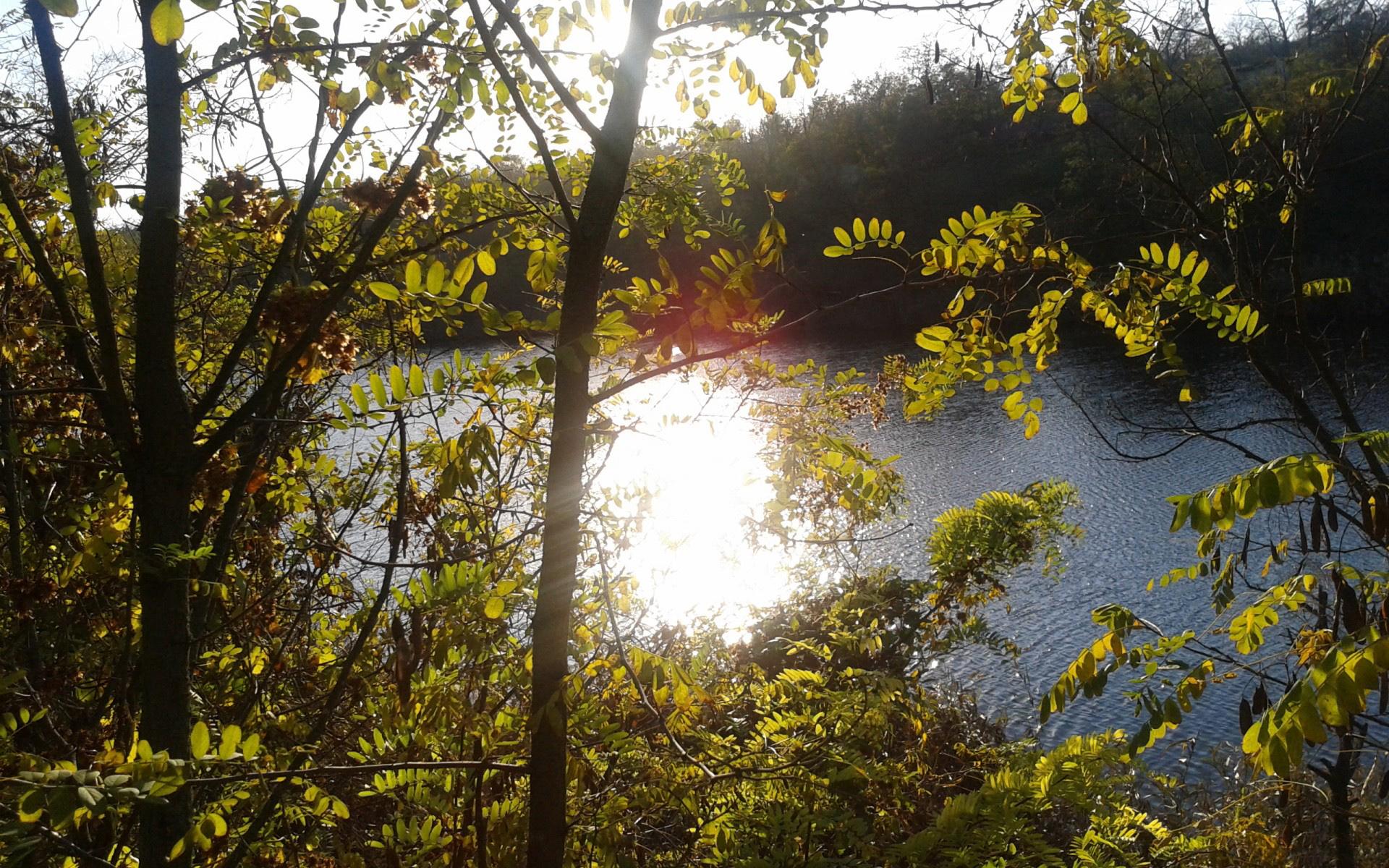 река, кусты, деревья