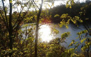 Фото бесплатно река, кусты, деревья