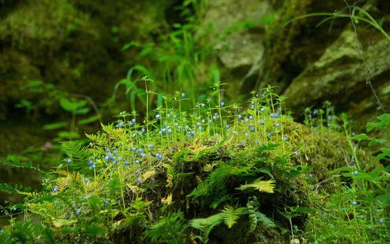 Бесплатные фото трава,растения,цветы,камни,папоротник,лес,природа