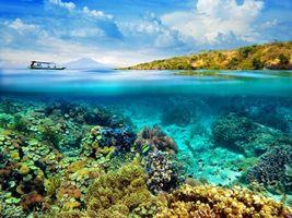 Фото бесплатно тропики, море, подводный мир, разное