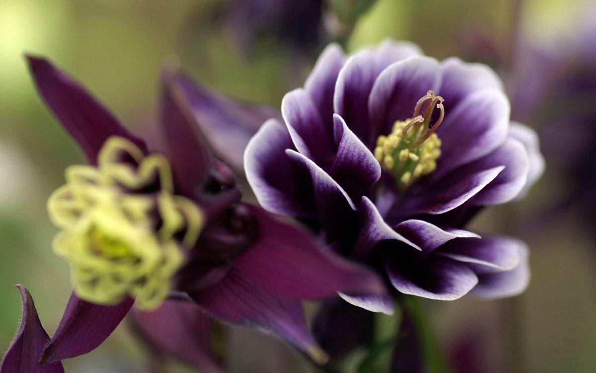 Фото бесплатно стебель, цветы, тычинки - на рабочий стол