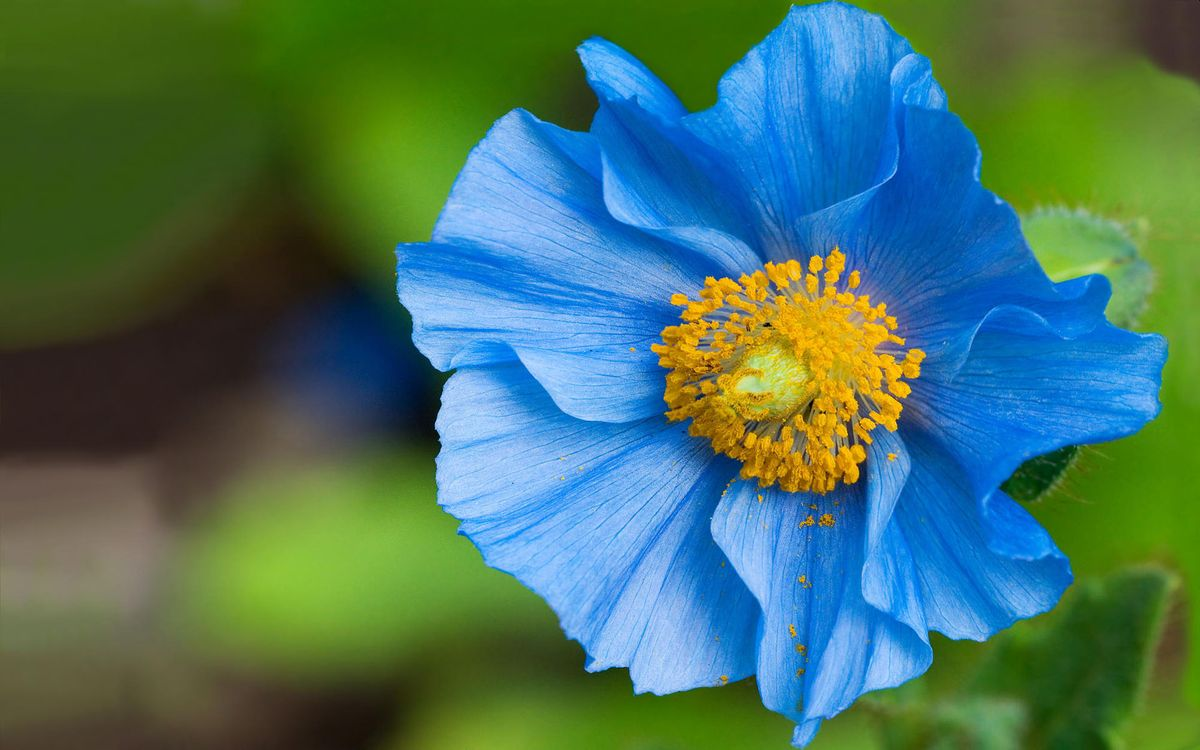 Фото бесплатно цветок, синий, голубой - на рабочий стол