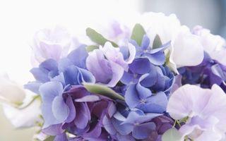 Фото бесплатно цветы, куст, букет, бутон, голубые, лепестки, нежные, аромат, листья