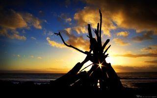 Фото бесплатно вечер, берег, коряги