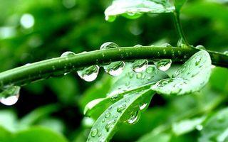 Заставки веточки,листья,роса,капли,после,дождя,зелень