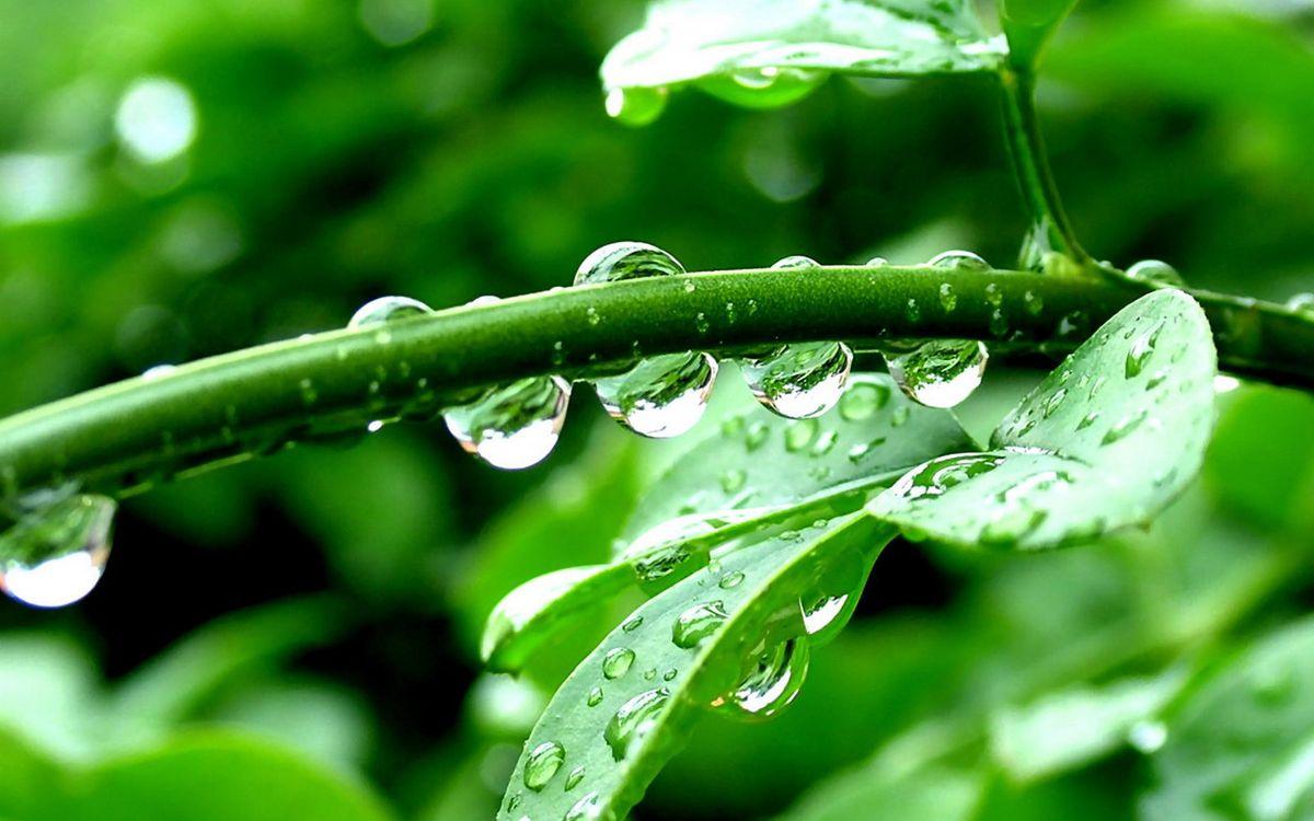 Фото бесплатно веточки, листья, роса, капли, после, дождя, зелень, макро, макро