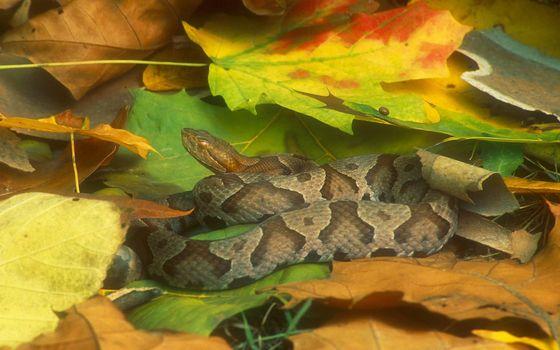 Фото бесплатно змея, листья, голова