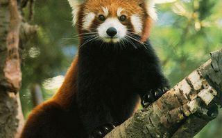 Photo free beast, panda, china