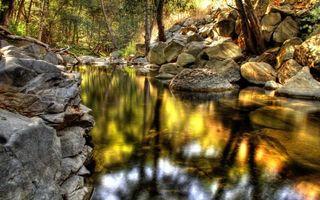 Бесплатные фото ручей,родник,ключ,в лесу,камни,валуны,чистая