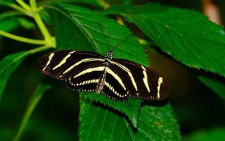 Фото бесплатно бабочка, крылья, раскраска