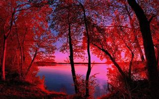 Фото бесплатно берег, озеро, деревья
