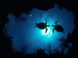 Фото бесплатно черепахи, море, вода