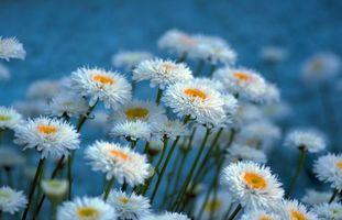 Фото бесплатно цветы, флора, макро