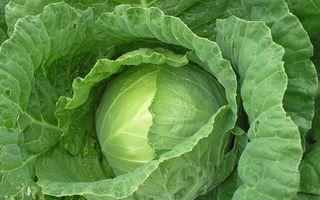 Фото бесплатно капуста, зеленая, вкусная