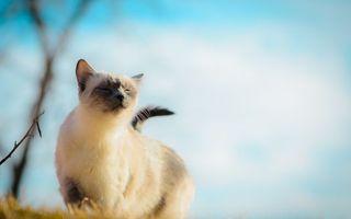 Бесплатные фото кошка,морда,уши,хвост,шерсть,ветка,кошки