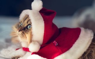 Фото бесплатно кот, дед, мороз, шапочка, новый год