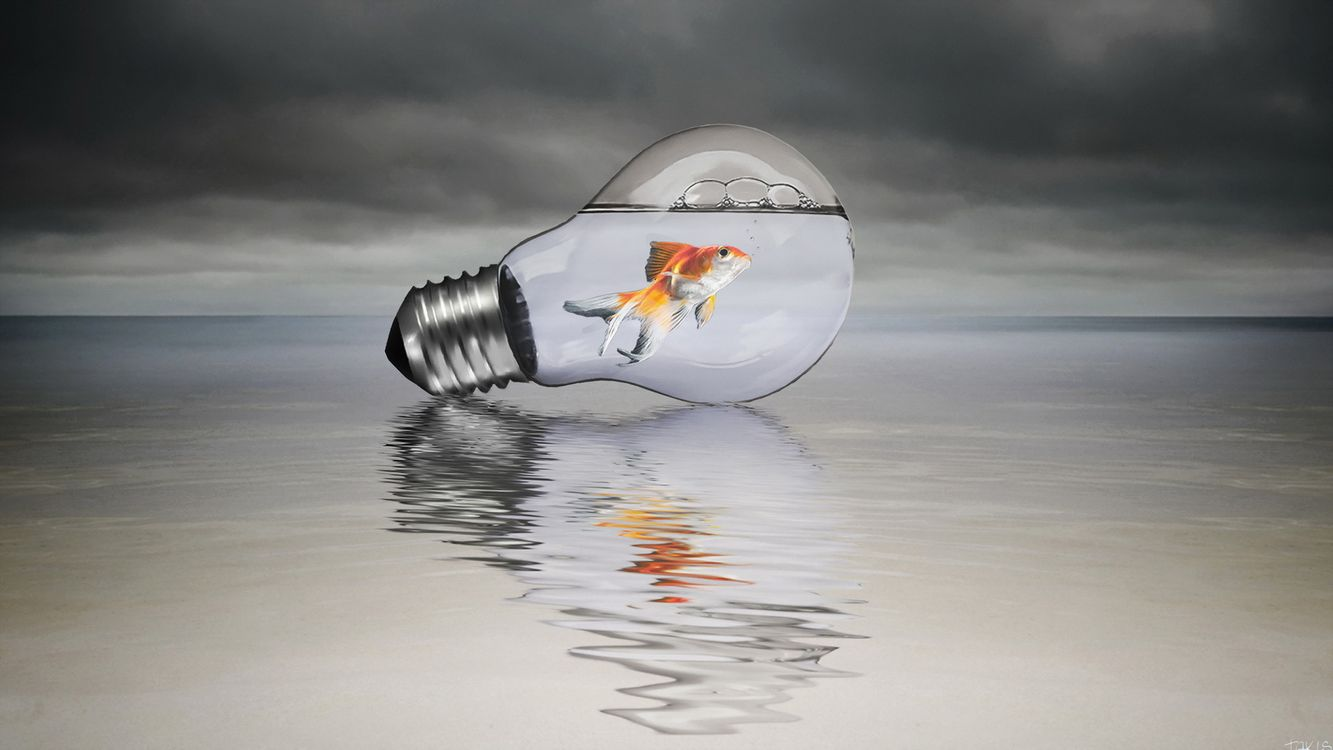 Фото бесплатно лампочка, рыба, вода - на рабочий стол