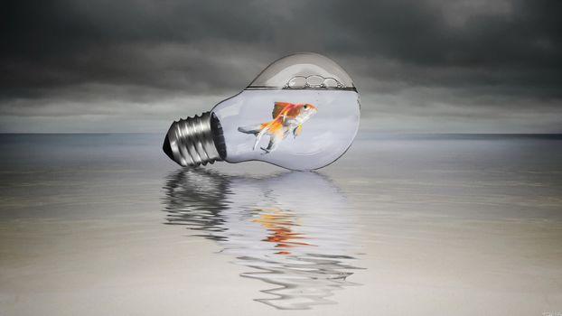 Photo free bulb, fish, water