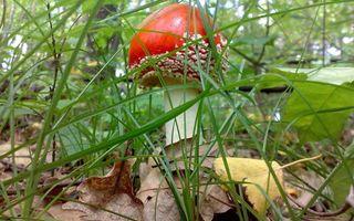 Фото бесплатно трава, зеленый, красный