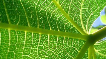 Фото бесплатно листок, зеленый, солнце, прозрачный, красивый необычный, природа