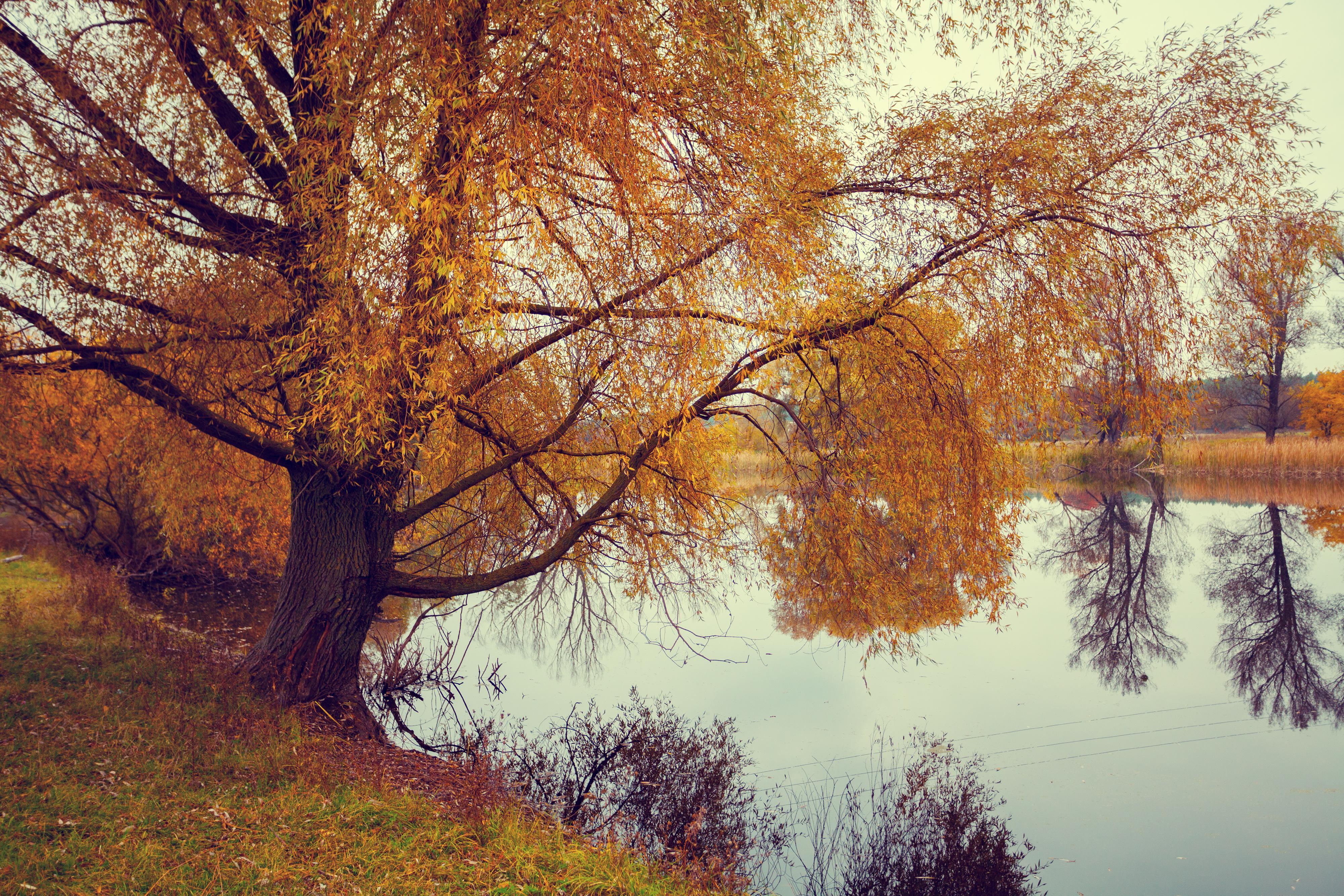 обои осень, река, деревья, пейзаж картинки фото