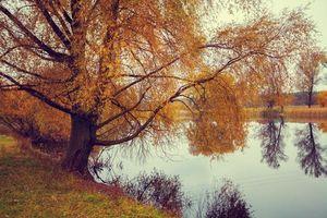Фото бесплатно осень, река, деревья