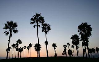 Фото бесплатно пальмы, небо, закат