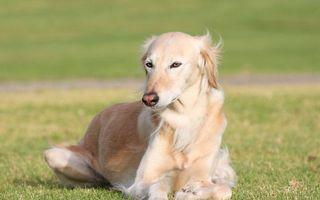 Бесплатные фото пес,щенок,шерсть,лохматый,пушистый,глаза,мордочка