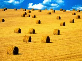 Фото бесплатно сухая, синий, поле