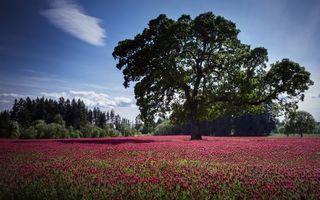 Фото бесплатно поле, цветы, розовые