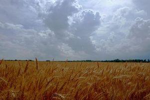 Photo free field, sky, clouds