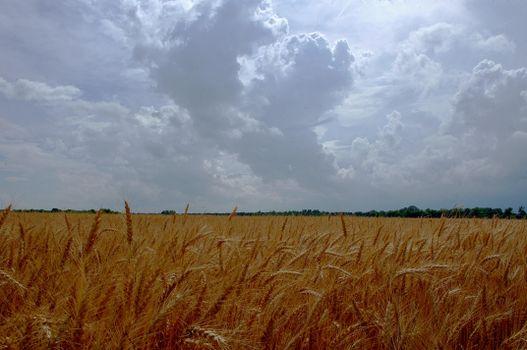 Бесплатные фото поле,небо,облака,тучи,гроза,колосья,пейзаж,природа