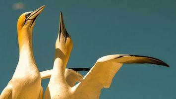 Бесплатные фото птицы,пара,желтые,оперение,голова,клюв,крылья