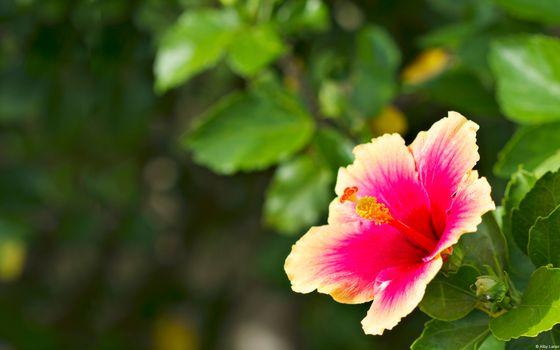 Бесплатные фото цветок,горшок,листья,стебель,лето,цветение,тепло,клумба,цветы