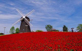 Бесплатные фото ветряная,мельница,деревья,люди,цветы,красные,разное