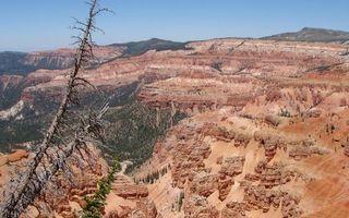 Бесплатные фото вид,высота,горы,скалы,деревья,лес,кора