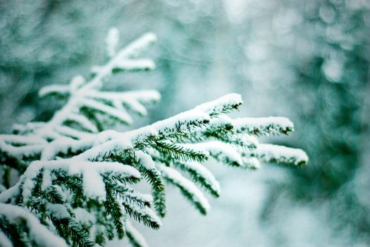 Photo free tree branches, fir-tree, winter
