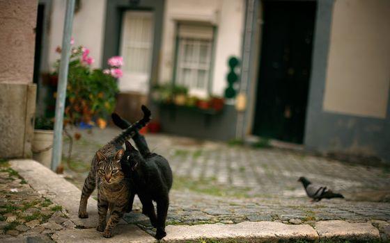 Бесплатные фото два кота,идут,по улице,друзья,голубь,кошки