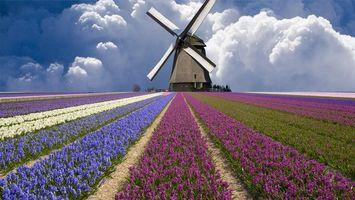 Бесплатные фото мельница,облака,нидерланды,поле,тюльпаны
