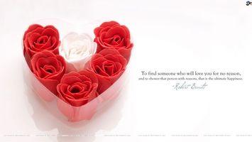 Фото бесплатно розы, день святого валентина, сердце