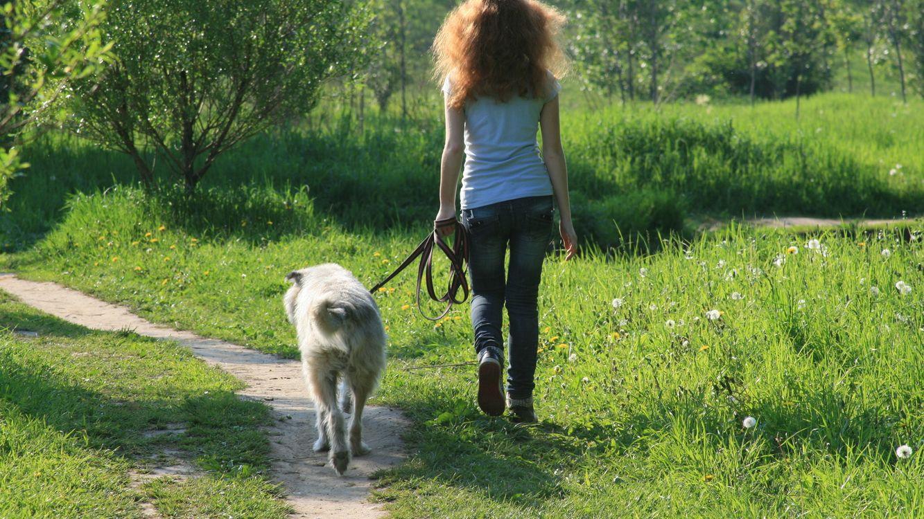 Фото бесплатно девушка, собака, прогулка - на рабочий стол
