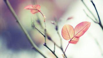 Фото бесплатно ветка, листья, оранжевый