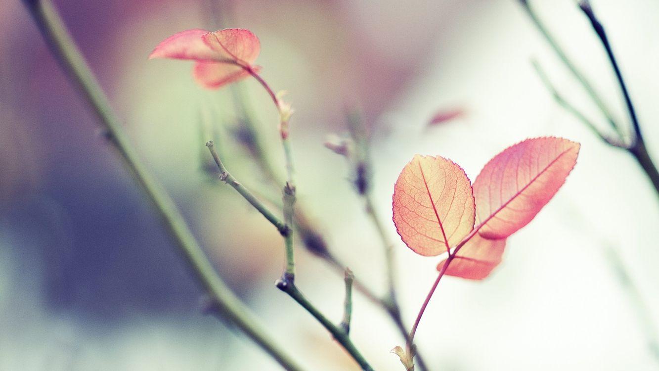 Обои ветка, листья, оранжевый, стебель, зеленый, макро на телефон | картинки макро