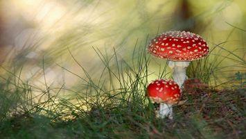 Бесплатные фото мухомор, гриб, пятна, лес, разное
