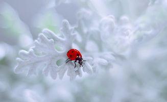 Бесплатные фото божья коровка,насекомые,растение,макро