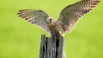 Фото бесплатно дерево, крылья, глаза