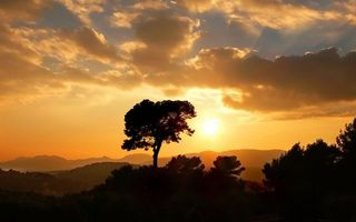 Фото бесплатно дерево, облака, тучи