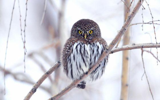 Бесплатные фото фон,сова,природа,животные