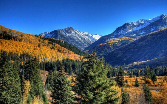 Фото бесплатно горы, растения, деревья